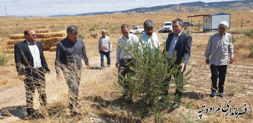 فرماندار مراوه تپه: کشت باغات، حمایت جدی مسئولین را میطلبد