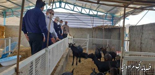 فرماندار مراوه تپه به همراه هیات همراه از شهرستان قلعه گنج کرمان بازدید کردند