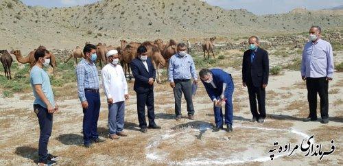 عملیات ایجاد پروژه بزرگ طرح شترداری 400 نفری کلنگ زنی شد